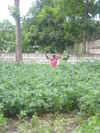 Callaloo3